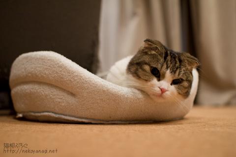 bed100508_1.jpg