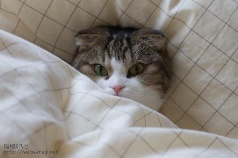 bed100530_1.jpg