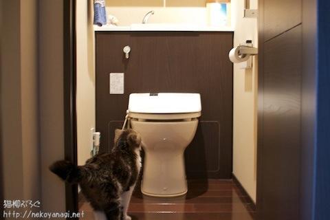 toilet100726_1.jpg