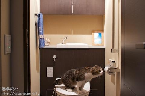 toilet100726_2.jpg