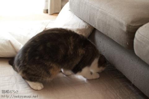 sofa100809_3.jpg