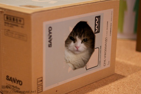 box100927_1.jpg