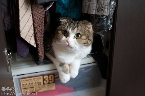 closet100919_1.jpg