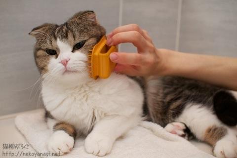 grooming101022_1.jpg