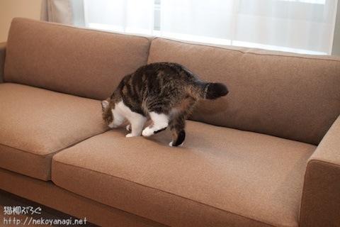 sofa101030_2.jpg