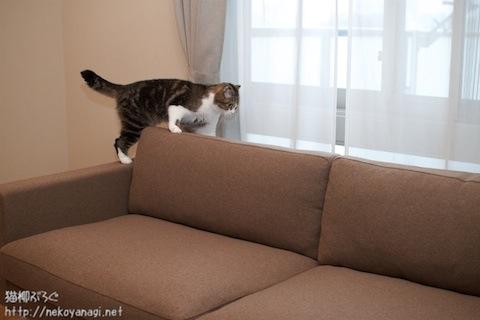 sofa101030_3.jpg