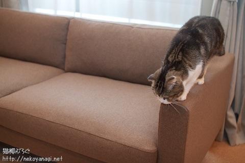 sofa101030_4.jpg