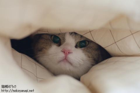 bed101120_1.jpg