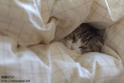 bed101120_2.jpg