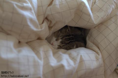 bed101120_3.jpg