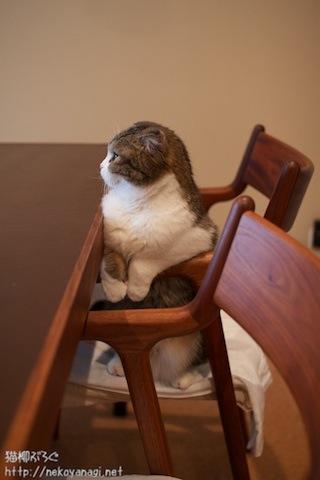 chair101102_2.jpg