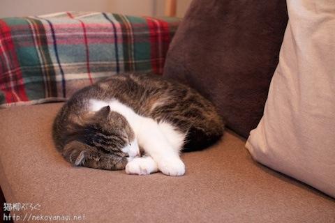 sofa101104_1.jpg
