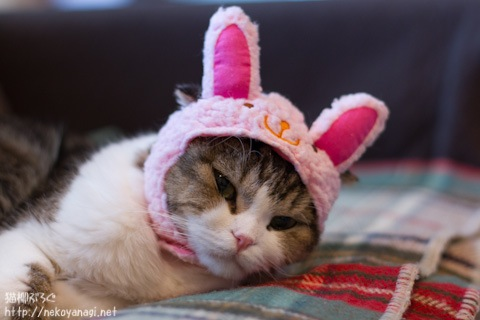 rabbit110101_1.jpg