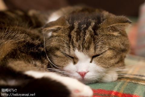sleeping101217_1.jpg
