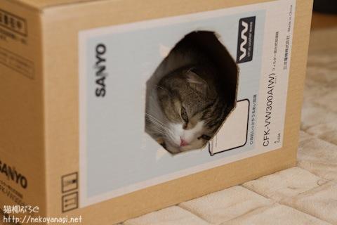 box110126_1.jpg