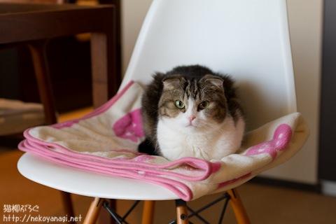 chair110124_1.jpg