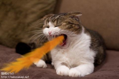 yawn110203_5.jpg
