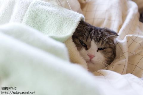 bed110321_2.jpg