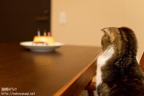 birthday110304_7.jpg