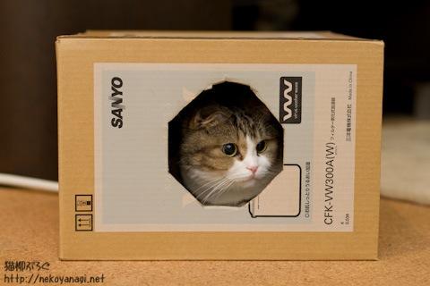box110423_1.jpg