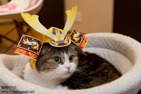 サムライ猫柳