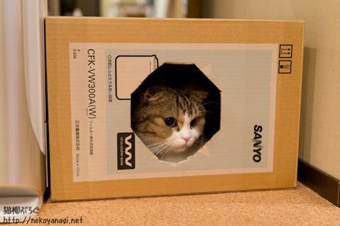 box110629_1.jpg
