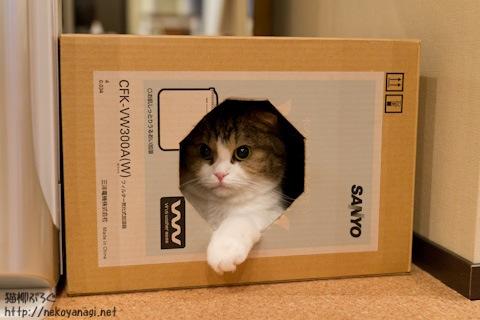 box110629_2.jpg