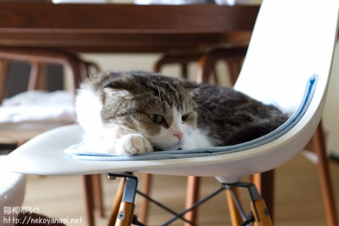 chair110803_1.jpg
