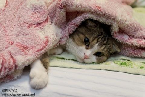 blanket110925_1.jpg