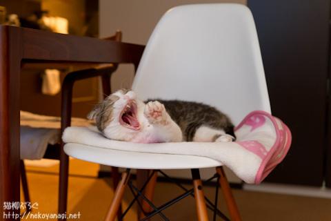 yawn110929_1.jpg
