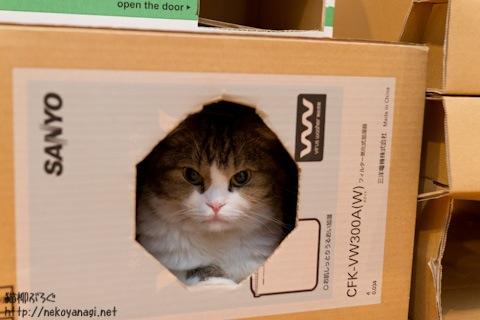 box111019_2.jpg