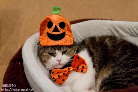 halloween111030_10.jpg