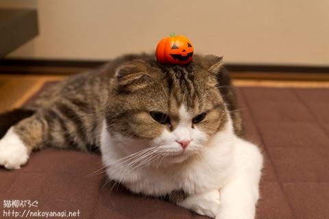 halloween111030_2.jpg