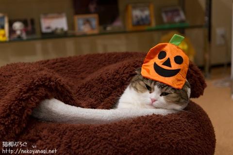 halloween111030_6.jpg