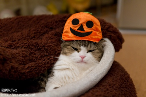 halloween111030_7.jpg
