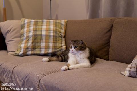 sofa111005_1.jpg