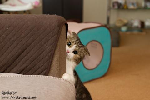 sofa111020_1.jpg