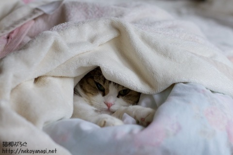 bed111107_2.jpg