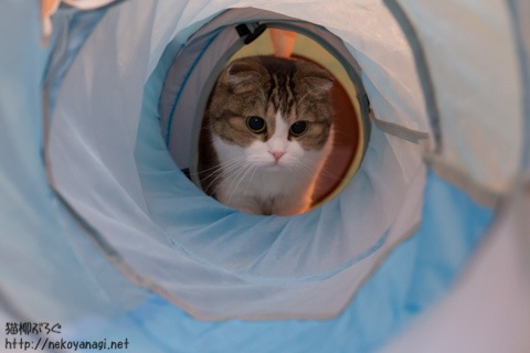 tunnel111114_3.jpg