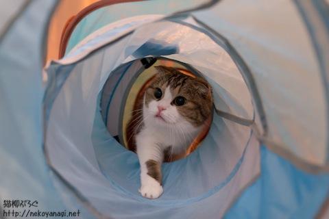 tunnel111114_4.jpg