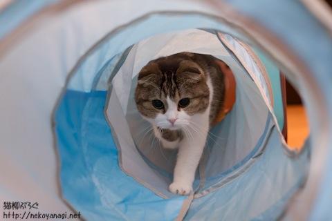 tunnel111115_2.jpg