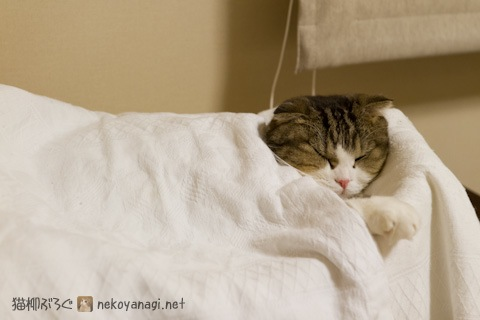 bed111213_1.jpg