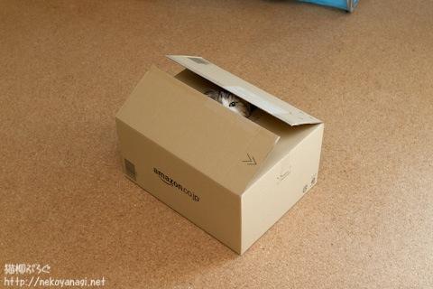 box111208_2.jpg