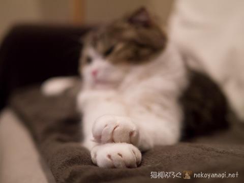 kagami111229_2.jpg