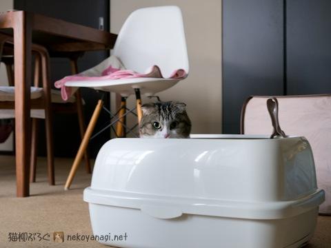 toilet111223_3.jpg