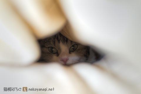 bed120104_2.jpg
