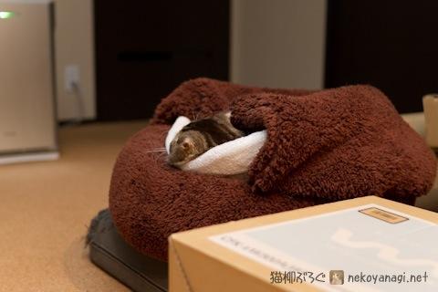 bed120117_1.jpg