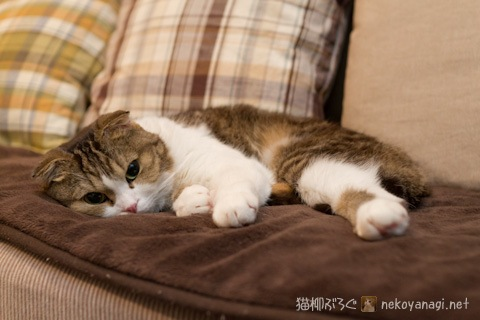 sofa120130_1.jpg