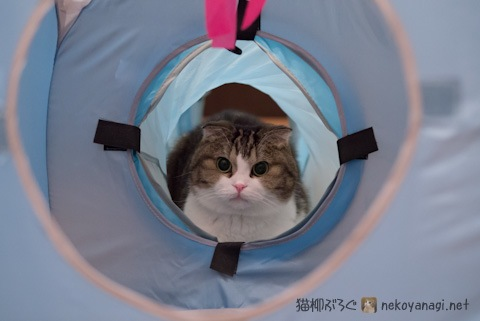tunnel120109_1.jpg