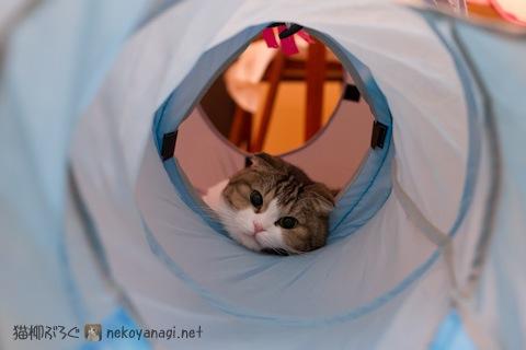 まったりトンネル